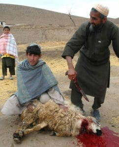 Man and boy sacrificing a sheep.