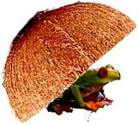 Gambar katak dalam tempurung